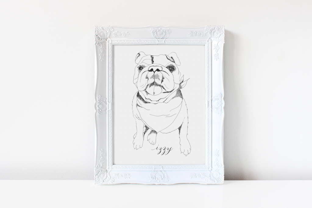 Bulldog ink drawing - Leah E. Moss Designs