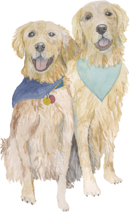 Pet Portrait of golden retriever dogs - Leah E. Moss Designs
