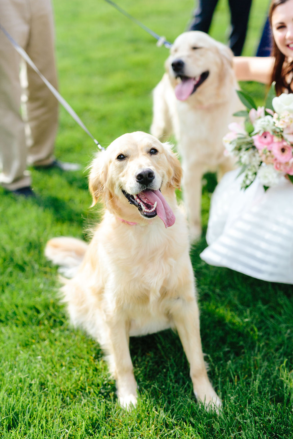 Dogs at the wedding - golden retriever - Preppy spring wedding at Zingerman's Cornman Farms - Leah E. Moss Designs - photo by Katie Grace Photography